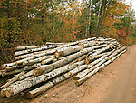 Pulp logs beside Forest Access Road Renfrew County Ontario Canada
