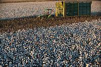 TURKEY, Kesik, near Menemen, harvest of conventional cotton with John Deere basket cotton picker, transport of cotton with tractor and trailer to ginning factory of company Genel Pamuk / TUERKEI, Kesik, bei Menemen, konventioneller Baumwollanbau, nach Verspruehen eines Entlaubungsmittel wird die Baumwolle maschinell mit einer John Deere Pflueckmaschine geerntet, Transport der Baumwolle mit Traktor und Haenger zur Entkernungsfabrik von Genel Pamuk