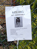 Sign offering a reward for a missing pet dog.