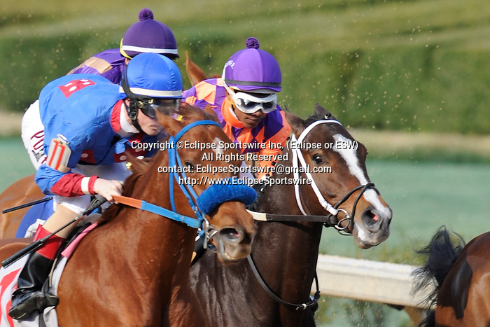 #11 Sugar Shock with jockey Channing Hill aboard and #6 Euphrosyne with jockey Ricardo Santana, Jr. during the running of the Honeybee Stakes (Grade III) at Oaklawn Park in Hot Springs, Arkansas-USA on March 8, 2014. (Credit Image: © Justin Manning/Eclipse/ZUMAPRESS.com)
