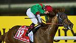 Animal Kingdom wins the Dubai World Cup on March 30th, 2013 at Meydan Racecourse
