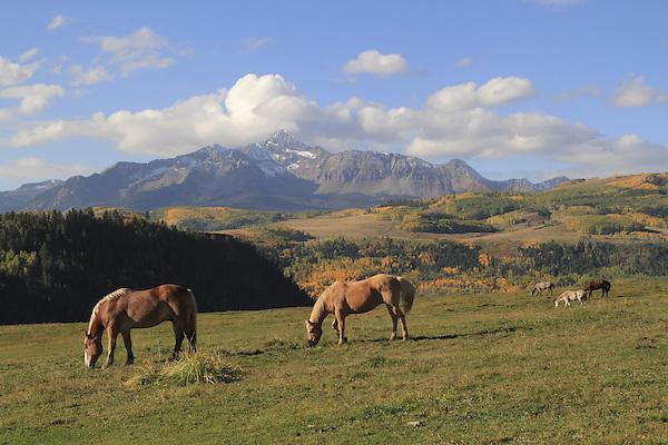 Horses grazing in front of Wilson Peak, San Juan Mountains near Telluride, Colorado.