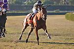 Twilight Eclipse wins the WL McKnight Handicap(G2T) with jockey Manuel Cruz up. Calder Race Course. Miami Gardens, Florida. 11-24-2012.  Arron Haggart/Eclipse Sportswire
