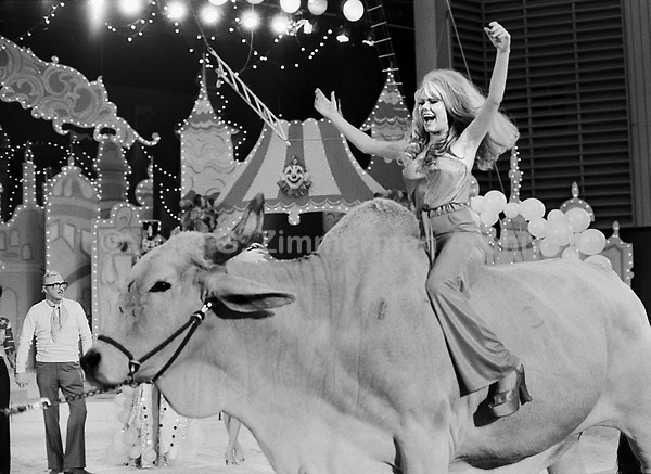 """Charo rides Brahman bull at the """"Circus of the Stars,"""" (CBS Special), Santa Monica Civic Auditorium, November, 1976. Ringermaster Jack Cassidy (L) in background. Photo by John G. Zimmerman"""
