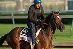 LOUISVILLE, KY - MAY 1: Coach Rocks, trained by Dale Romans, exercises in preparation for the Kentucky Oaks at Churchill Downs on May 1, 2018 in Louisville, Kentucky. (Photo by Eric Patterson/Eclipse Sportswire/Getty Images)