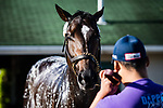 LOUISVILLE, KENTUCKY - MAY 01: McCraken, owned by Whitham Thoroughbreds LLC and trained by  Ian R. Wilkes, gets a bath after exercising in preparation for the Kentucky Derby  at Churchill Downs on May 1, 2017 in Louisville, Kentucky. (Photo by Douglas DeFelice/Eclipse Sportswire/Getty Images)