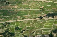 SWITZERLAND Kanton Wallis, Martigny, agriculture in the mountains, fields with vine grapes / SCHWEIZ Kanton Wallis Landwirtschaft auf Alpen zur Vermeidung von Verbuschung der Kulturlandschaften, Weinbau bei Martigny