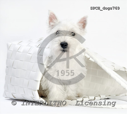 Xavier, ANIMALS, dogs, photos, SPCHdogs769,#A# Hunde, perros