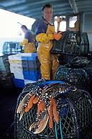 "Europe/France/Bretagne/29/Finistère/Saint-Guénolé: Pêche au homard à bord du ""Galathée"" (AUTO N° 260-261-262)"