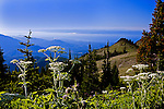 View south toward Hurricane ridge and the Strain of Juan de Fuca over the crest of the Olympic Mountains from Deer Park in Olympic Mountain National Park, on the Olympic Penninsula, Washington State, near Hurricane Ridge.  The city of Port Angeles lies in the mist. Olympic Peninsula