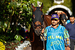 DEL MAR, CA  AUGUST 1:  #5 Cover Version, ridden by Abel Cedillo, enters the paddock before the Clement L. Hirsch Stakes (Grade 1) Breeders Cup Win and You're In Distaff Division on August 1, 2021 at Del Mar Thoroughbred Club in Del Mar, CA.
