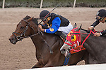 January 24, 2015: Barbados with Luis Saez up out finishes X Y Jet to the wire to win the Hutcheson (G3) at Gulfstream Park. Gulfstream Park, Hallandale Beach (FL). Arron Haggart/ESW/CSM