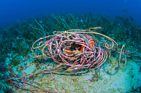 Discarded rope littering the coral reef in Palm Beach, Florida, USA, Atlantic Ocean Rope and fishing line trap, maim and kill thousands of marine animals worldwide every year