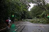 New York, New York<br /> September 16, 2010<br /> <br /> Park Slope after a severe storm and possible tornado. Inside Prospect Park.
