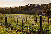 South Africa,Eastern Cape, in the area around Stellebosch there are the tipical wvineyards