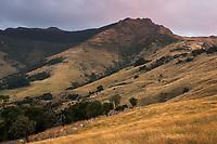 Farmland near Akaroa with Brasenose and Flag Peak (809m) of Banks Peninsula at twilight, Banks Peninsula, Canterbury, South Island, New Zealand