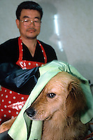 Korea. South Korea. Kyonggi-do area. Gwanjiu. Bathing big dogs is one of the services that offer this small pet business company.  © 2002 Didier Ruef