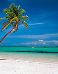 Dominikanische Republik, Punta Cana, Bavaro Beach: einzelne Palme am leeren Strand | Dominican Republic, Punta Cana, Bavaro Beach: single palm tree at secluded beach