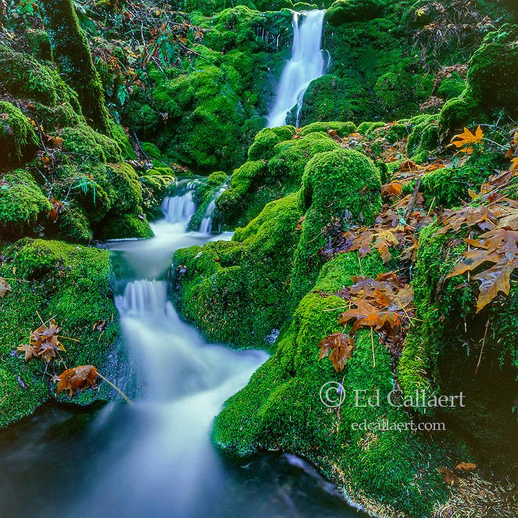 Moss Falls, Cataract Canyon, Mount Tamalpais, Marin County, California