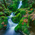 Moss Falls, Cataract Canyon, Mount Tamalpais, Marin County, California