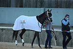 March 6, 2021: Will's Secret before the Honeybee Stakes (G3) at Oaklawn Racing Casino Resort in Hot Springs, Arkansas on March 6, 2021. Justin Manning/Eclipse Sportswire/CSM