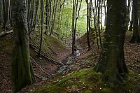 GERMANY, Ruegen, beech forest / DEUTSCHLAND, Mecklenburg-Vorpommern, intakter Wald, Laubwald mit Buchen im Nationalpark Jasmund, Bach