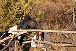 A Native American Indian man placing a horse in an Indian log handmade corral