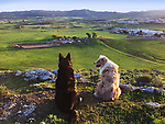 The dogs look down on the ranch from the top of the hill.