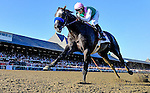 SARATOGA SPRINGS, NY - AUGUST 27:Arrogate #1, ridden by Mike Smith, wins the Travers Stakes on Travers Stakes Day at Saratoga Race Course on August 27, 2016 in Saratoga Springs, New York. (Photo by Sue Kawczynski/Eclipse Sportswire/Getty Images)