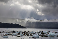 Icebergs dot the shores in College Fjord, Chugach National Forest, Prince William Sound, Alaska.