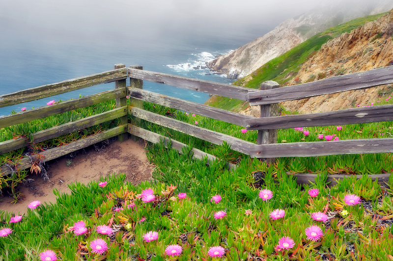 Blooming ice plants and fence with ocean. Point Reyes National Seashore. California