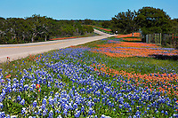 In this image, Gorgeous colorful scenic landscape of bluebonnets and Indian Paintbrush paint the Texas state highway near Llano as far as the eye can see turning the countryside roadway in to splashes of vibrant blue and red colors - Stock Image.