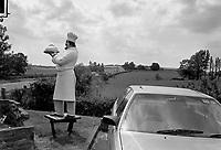 - UK, landscape in Surrey, June 1988<br /> <br /> - Gran Bretagna, paesaggio nel Surrey, Giugno 1988