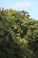Percursso em direção ao arquipélago do Bailique, saindo por estrada de terra de Macapá por cerca de 2 horas embarcando em voadeira motor quarenta por 3 horas.<br /> Arquipélago do Bailique, Amapá, Brasil.<br /> ©Paulo Santos<br /> 10/09/2016