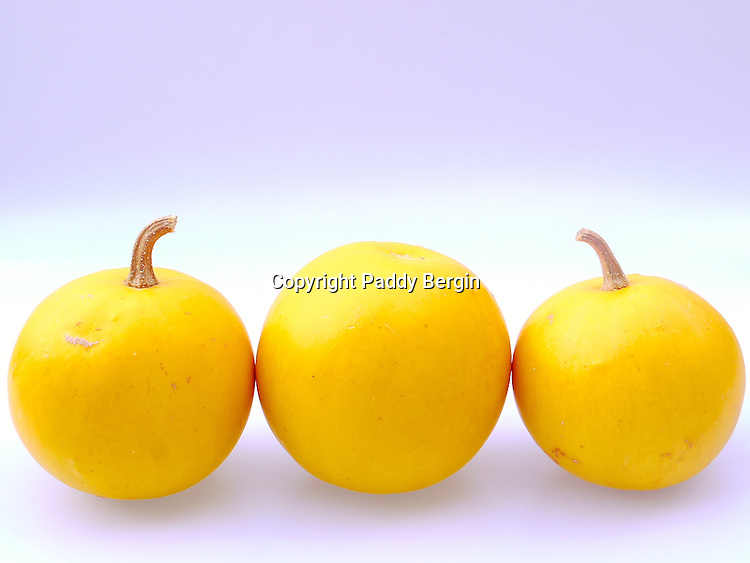 Cucurbita (Latin for gourd) is a genus in the gourd family Cucurbitaceae native to and first cultivated in the Andes and Mesoamerica.<br /> <br /> The Squash in this photo are in fact plastic.<br /> <br /> Stock Photo by paddy bergin