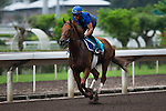 SHA TIN,HONG KONG-APRIL 26: Safety Check,trained by Charlie Appleby,exercises in preparation for the Champions Mile at Sha Tin Racecourse on April 26,2016 in Sha Tin,New Territories,Hong Kong (Photo by Kaz Ishida/Eclipse Sportswire/Getty Images)
