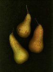 Three pears arranged in a still life.