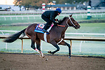 October 31, 2020: Keepmeinmind, trained by trainer Robertino Diodoro, exercises in preparation for the Breeders' Cup Juvenile at Keeneland Racetrack in Lexington, Kentucky on October 31, 2020. Scott Serio/Eclipse Sportswire/Breeders Cup/CSM