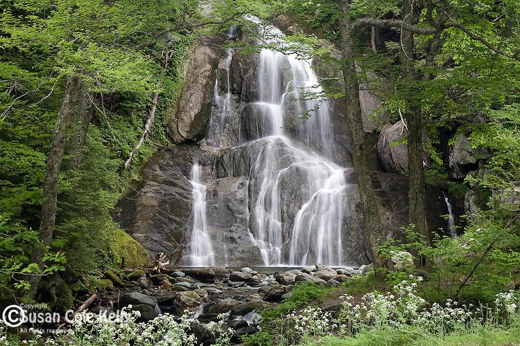 Wildflowers at Moss Glen Falls, Green mountain National Forest, VT, USA