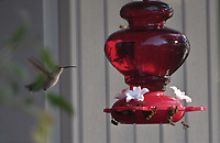 TERRI O'BYRNE/WEEKLY VISTA<br />