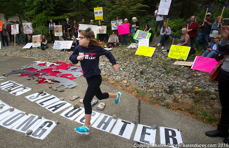 """Gina Nunez, 11, from Buckley, Wash. leaps over a banner that says """"Stop the Slaughter"""" on her way to address the crowd protesting the killing of the Profanity Peak wolf pack outside the Washington Department of Fish and Wildlife (WDFW) headquarters in Olympia, Washington on September 1, 2016.""""There shouldn't be a reason to kill wolves if there's more cows than wolves in Washington."""" she said. Nunez was there with her mother Jill Nunez. """"It's our first protest,"""" said Jill. """"We felt so strongly about this."""" (photo © Karen Ducey Photography)"""