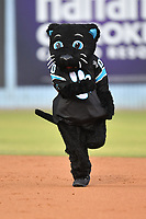Sir Purr rounds the bases during the mascot race during a game between the Rome Braves and the Asheville Tourists at McCormick Field on September 2, 2018 in Asheville, North Carolina. The Braves defeated the Tourists 2-1. (Tony Farlow/Four Seam Images)