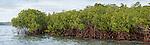 Rakiraki, Viti Levu, Fiji; a panoramic view of mangroves protecting the shoreline