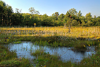 Cranesville Swamp, a high mountain bog, now mostly protected as a Nature Conservancy Sanctuary, West Virginia, USA. A portion of the approximately 600 acre wetland is in Maryland.