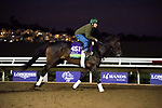 DEL MAR, CA - NOVEMBER 01: Ballagh Rocks, owned by Donegal Racing and trained by William I. Mott, exercises in preparation for Breeders' Cup Mile at Del Mar Thoroughbred Club during morning workouts on November 1, 2017 in Del Mar, California. (Photo by Michael McInally/Eclipse Sportswire/Breeders Cup)