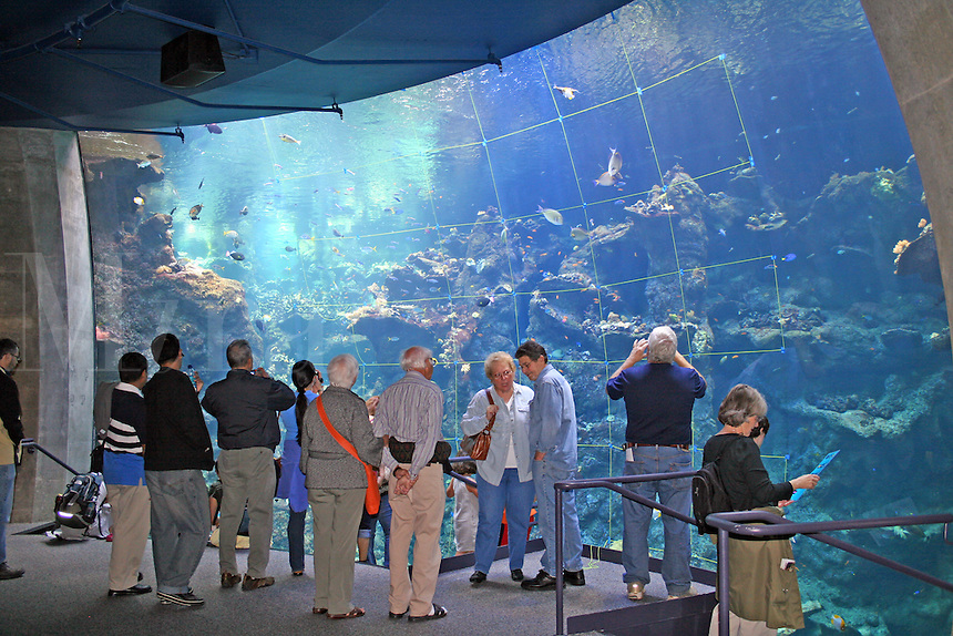 People Philippine Coral Reef exhibit, new California Academy of Sciences, San Francisco California