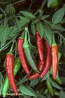HS41-255x  Pepper - hot pepper, ornamental, Super Chile variety