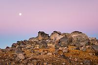 Volcanic rocks with full moon at twilight Tongariro National Park, Central Plateau, Ruapehu Region, North Island, UNESCO World Heritage Area, New Zealand, NZ