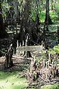 Jean Lafitte National Preserve