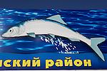 omoul, un poisson endémique, emblématique du lac Baikal. On le mange grillé, fumé, salé, gelé et même cru.